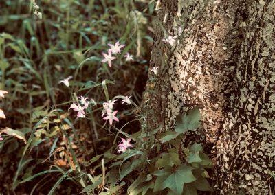 Reconnecting to Nature: Wonder & Self Healing